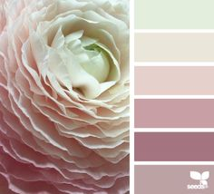 Design Seeds celebrate colors found in nature and the aesthetic of purposeful living. Bedroom Color Schemes, Bedroom Colors, Colour Schemes, Color Combinations, Bedroom Ideas, Bedroom Inspiration, Bedroom Wall, Design Seeds, Old Rose Color