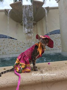 Coco, the Couture Cat: Wordless Wednesday-Pet Holiday Edition! Fabulous Furs, Pet Fashion, Cat Walk, Fundraising, Fur Babies, Wednesday, Couture, Pets, Holiday