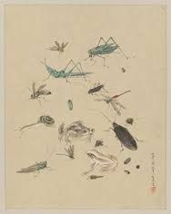 japanese drawing - Google Search Japanese Drawings, Japanese Art, Beetle, Insects, Diagram, Map, Animals, Google Search, Color