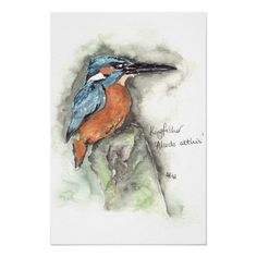 Kingfisher in watercolour print