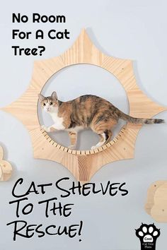 The Ultimate Guide To Cat Shelves - Cool Cat Tree Plans - The Ultimate Guide To Cat Shelves – Cool Cat Tree Plans Cat Shelves – What's the best shelving for cats? Cool Cat Trees, Diy Cat Tree, Cool Cats, Cat Tree Plans, Cat Wall Shelves, Shelves For Cats, Animal Gato, Chesire Cat, Cat Perch
