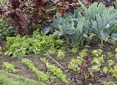 Quels légumes planter dans un mini potager ?  Jardinez en miniature. Telle la bette à cardes, certaines espèces conviennent bien aux potagers en miniature, en particulier celles qui donnent des récoltes abondantes sur une surface réduite ou qui restent longtemps en place.