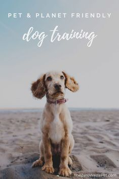 Quick and practical tips to make your dog training efforts gentler on your dog and gentler on the planet Baby Dogs, Pet Dogs, Dogs And Puppies, Pets, Food Dog, Dog Quotes Love, Pet Quotes, Pet Travel, Large Dogs