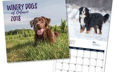 The first Winery Dogs calendar from Ontario wine country! On sale now at several wineries. There's a list in this blog post. FYI, Karen Black of Indigo Pet Photography has an amazing way with animals. Consider booking your pet's portrait with her now! http://indigopetphotography.com