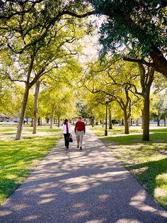 Rice University. Near Engineering Quad
