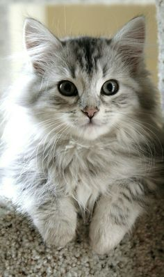"""I looked up """"fluffy"""" in the dictionary and this was the definition!"""