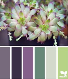 """nature made hues from """"Seeds"""": Awesome website for color schemes for anything and everything!"""