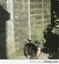 Wow :) it's amazing how high a cat can jump. This one looks like it literally climbed the flat wall with no support.