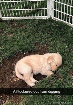 Astonishing Everything You Ever Wanted to Know about Golden Retrievers Ideas. Glorious Everything You Ever Wanted to Know about Golden Retrievers Ideas. Cute Little Animals, Cute Funny Animals, Cute Dogs And Puppies, I Love Dogs, Doggies, Chihuahua Dogs, Dog Snapchats, Retriever Puppy, Cute Animal Pictures