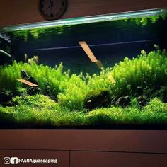 Let's get it started!!! #FAAO #Aquaflora #Aquascaping #Planted #Aquarium #Aquatic #Plant #Freshwater #aquascape #plantedtank #plantedaquarium