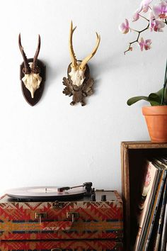 Faux Deer Antler Wall Sculpture - Urban Outfitters #UOonCampus #UOContest