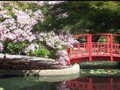 Japanese garden. Wilmington NC