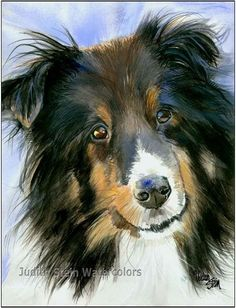 Shetland Sheepdog, Sheltie, AKC Herding, Pet Portrait Dog Art Watercolor… More