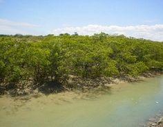 Área de Proteção Ambiental das Reentrâncias Maranhenses - Cururupu, Maranhao