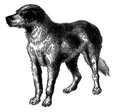 Antique Images: Vintage Dog Breed Boarhound Digital Download Animal Clip Art