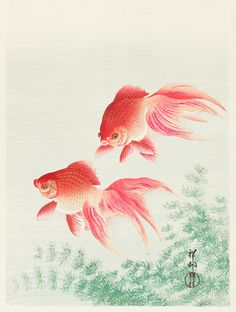 Two Veil Goldfish - 1926 - Japanese Art - Fish Illustration Poster Japanese Prints, Japanese Art, Ohara Koson, Fish Illustration, Blossom Trees, Japanese Painting, Free Illustrations, Print Artist, Woodblock Print