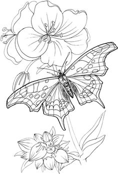 Butterfly Coloring Pages 24 | Free Patterns | Yarn