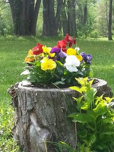 Spring flowers and garden decor