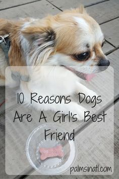 10 Reasons Dogs Are A Girl's Best Friend - The Palmetto Peaches: