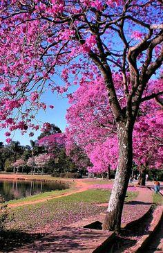 The amazing colors of Ibirapuera Park // São Paulo www.portobay.com photo: AntonioJVidal.
