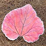 Rhubarb leaf bird bath or garden stepping stone (I've made one of these and it's beautiful!)