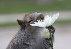 52 animaux attendrissants qui s'enivrent du parfum printanier des fleurs | Daily Geek Show