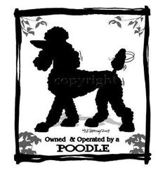 Poodle Owned and Operated!!!