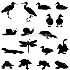 Pond life silhouettes Royalty Free Stock Vector Art Illustration