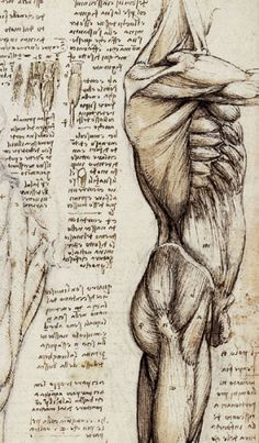 Leonardo Da Vinci. Anatomical Study of the Muscles of the Side of the Torso, c. 1507. See: pinterest.com/pin/287386019946407968/