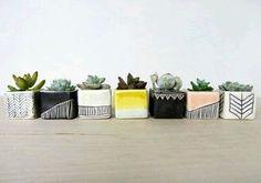 5 Tips Sukses Merawat Indoor Plant   Majalah Griya Asri