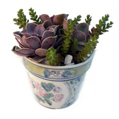 Here are some arrangements that Southeast Succulents has sold in the past...