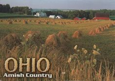A Postcard a Day: Harvest Amish Country, Finland, Harvest, Ohio, Vineyard, Day, Outdoor, Outdoors, Columbus Ohio