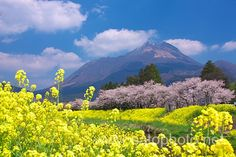 湯布院 大分 yufuin:beautiful villages