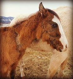 Stop the Horse Slaughtering.