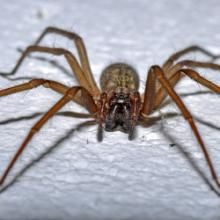 All natural ways to keep spiders out of your home