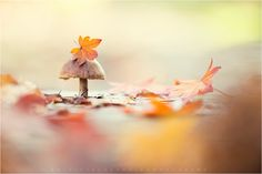 a beautiful world Harvest Moon, Fall Harvest, Seasons Of The Year, Windy Day, Autumn Day, Happy Colors, Beautiful World, Photography Tips, Cool Photos