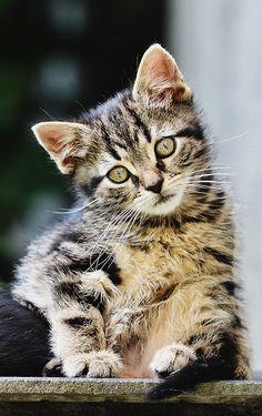 Sweet Kitty (h3rzogPL on Flickr)