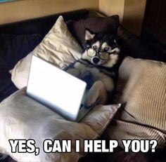 Check out these cute dogs and funny dogs in this cute and funny dog videos compilation. Los perros son lindos y adorables. Dog Quotes Funny, Funny Animal Memes, Animal Quotes, Dog Memes, Cute Funny Animals, Funny Animal Pictures, Funny Cute, Funny Shit, Funny Dogs