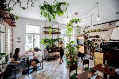 Minidzsungel a Városligetnél – megnyitott a Pesti Palánta vegán kávézó és növénybolt Brunch, Pesto, Plants, Plant, Planets
