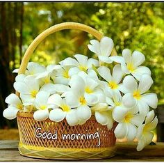 [Good morning love] Latest good morning images for love ~ Good morning inages Good Morning Posters, Good Morning Cards, Good Morning Picture, Good Morning Flowers, Good Morning Greetings, Good Morning Wishes, Good Morning Good Night, Good Morning Quotes, Good Morning Beautiful Pictures