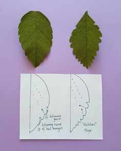 LEAF MARGINS. I think this is where it starts falling apart for most students…