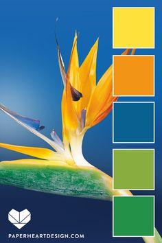 Color Palette: Pantone Color of the Year Classic Blue — Paper Heart Design Orange Color Palettes, Color Schemes Colour Palettes, Nature Color Palette, Green Colour Palette, Blue Colour Palette, Color Trends, Pantone Verde, Tropical Colors, Tropical Plants