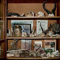 Daniel Naudé: Flip Looch's collection cabinet. Quaggasfontein farm, Graaff-Reinet, Eastern Cape, 17 June 2009