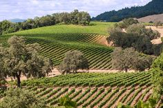 One of my favorite vacations of all times was visiting wine country in Napa and Sonoma. Can't wait to go back! California Wine, Napa Valley, Wine Country, Wine Tasting, Vineyard, Around The Worlds, River, St Francis, Outdoor