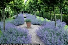 Gravel path with Nepeta 'Six Hills Giant' photographed by Andrew Lawson. www.garden-collection.com