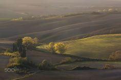 Tuscany velvet - null