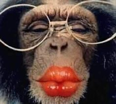 Funny Glasses | Funny Monkey in Glasses New Photos/Images 2012 | Funny Animals