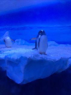 We Saw Penguins??!, London Aquarium ~ 2016