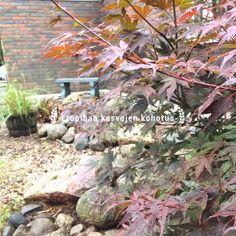 Remake facelift for Japanese inspired front yard. Espoo, Finland Finland, Garden Design, Yard, Japanese, Inspired, Eyes, Plants, Inspiration, Beauty