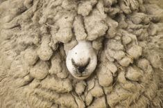 20 Things You Didn't Know About...Wool | DiscoverMagazine.com